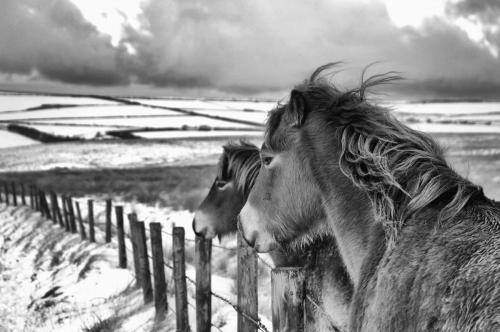 Winter exmoor 2018